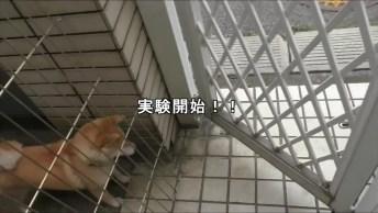 Cachorrinho Sendo Trollado, Olha Só Sua Reação Engraçadinha!