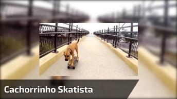 Cachorrinho Skatista, Ele Não Desequilibra Nem Um Pouco, Confira!