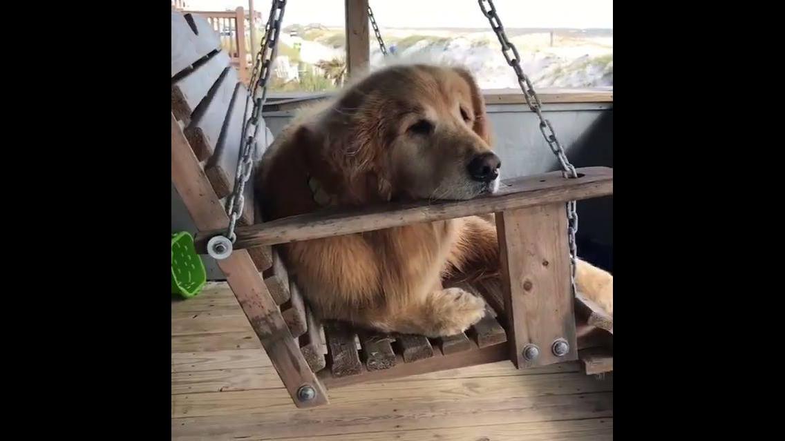 Cachorrinho só curtindo o balanço