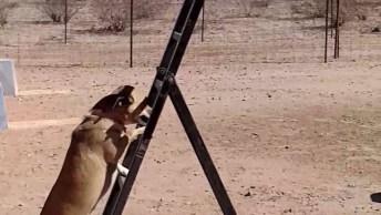 Cachorrinho Sobe As Escadas E Pula No Colo Do Tutor, Que Confiança!