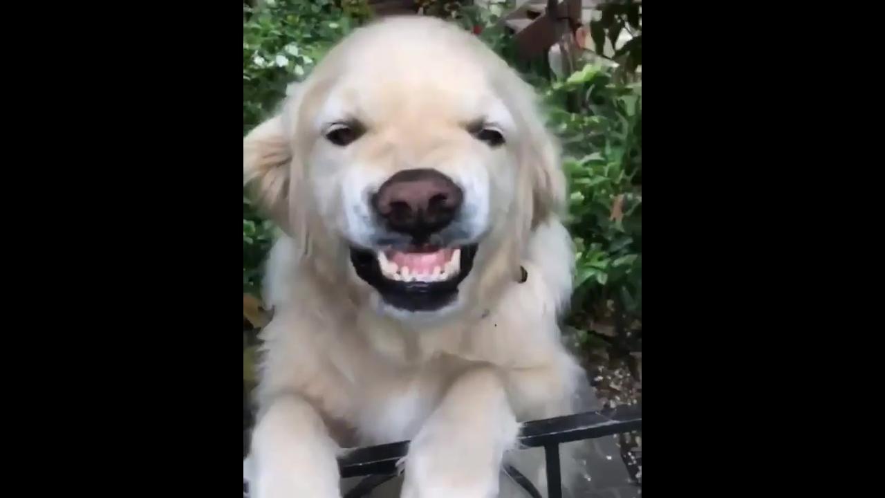 Cachorrinho sorri para sua dona