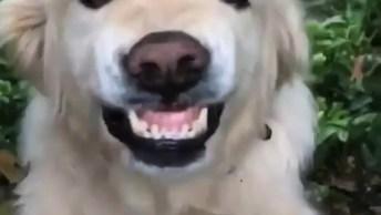 Cachorrinho Sorri Para Sua Dona, Olha Só Que Coisa Mais Linda!