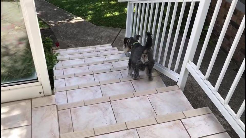 Cachorrinho subindo escada de ré