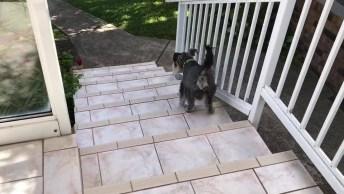 Cachorrinho Subindo Escada De Ré, Olha Só Que Animalzinho Fofo!