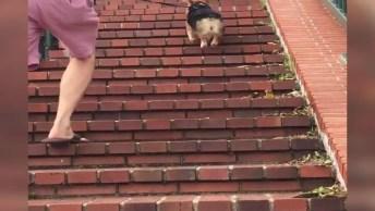 Cachorrinho Subindo Escada Pulando, Que Cena Mais Fofa!