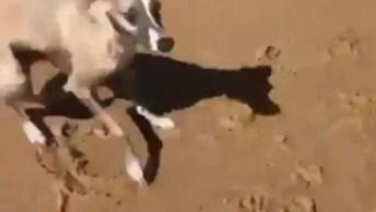 Cachorrinho Super Feliz Pela Primeira Vez Na Praia, Veja Como Ele Corre!