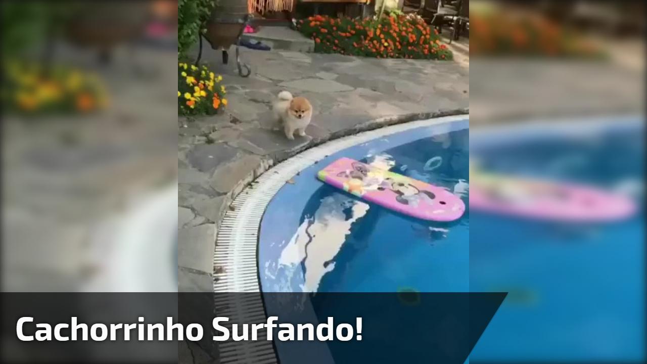 Cachorrinho surfando!
