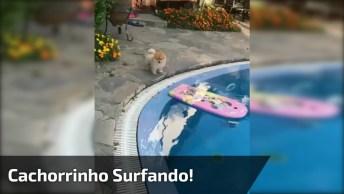 Cachorrinho 'Surfando' Na Piscina, Que Coisa Mais Fofinha!