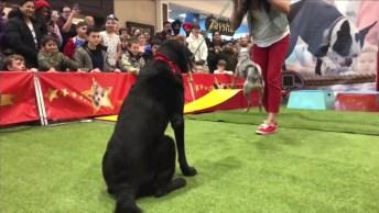 Cachorrinho Talentoso, Mais Um Vídeo Que Dá Gosto De Compartilhar!