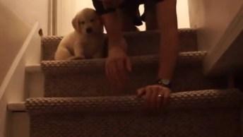 Cachorrinho Tem Medo De Descer As Escadas, Veja Que Dono Mais Amoroso!