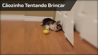 Cachorrinho Tentando Brincar Com A Bola, Hahaha! Que Criaturinha Mais Fofa!