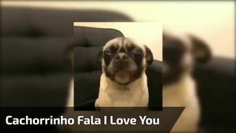 Cachorrinho Tentando Falar 'I Love You', É Uma Gracinha!