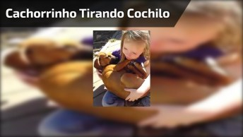Cachorrinho Tirando Cochilo No Colo De Garotinha, Até Canção De Ninar Ele Ganhou