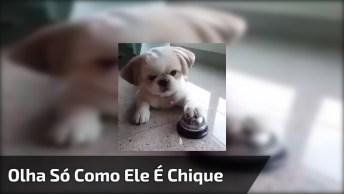 Cachorrinho Toca Campainha Para Ganhar Petisco, Olha Só Como Ele É Chique!