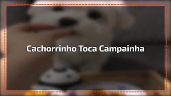 Cachorrinho Toca Campainha Para Ganhar Petisquinho, Olha Só A Carinha Dele!