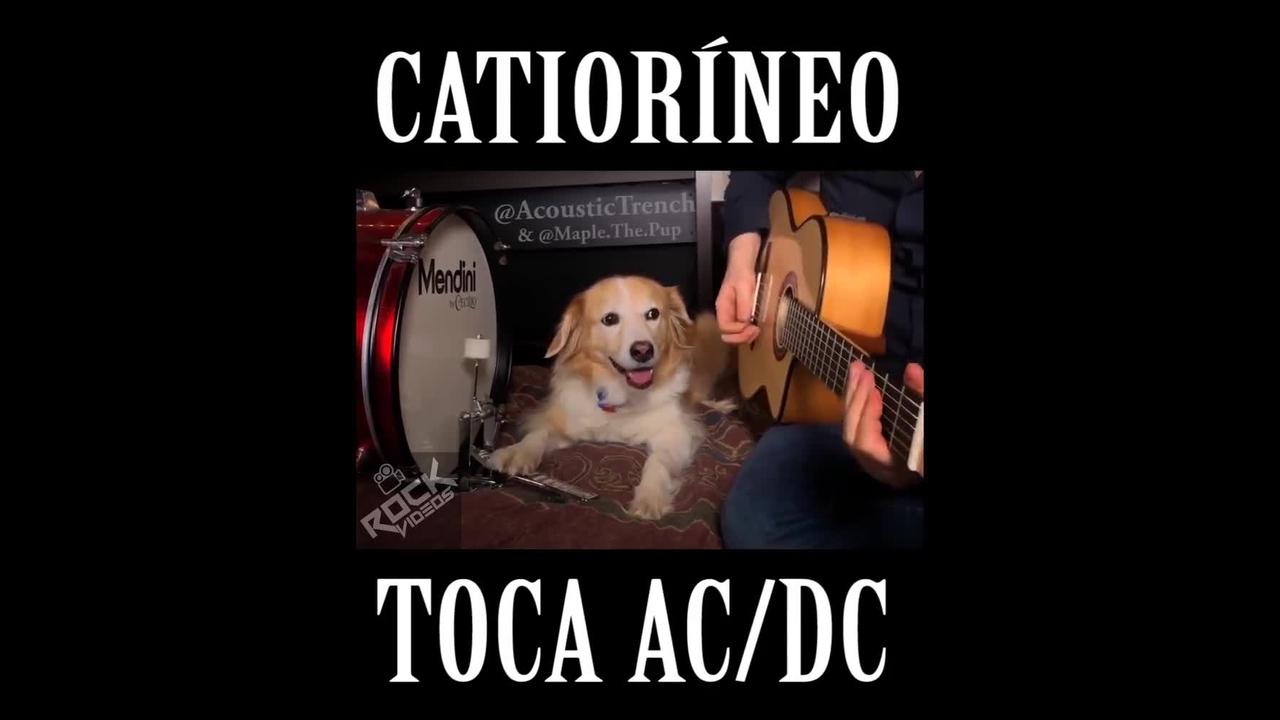 Cachorrinho tocando musica com seu humano