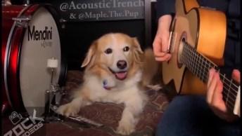 Cachorrinho Tocando Música Com Seu Humano, Olha Que Cão Talentoso!