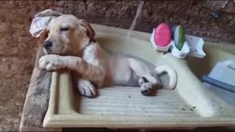 Cachorrinho Tomando Banho No Tanque, Ele Esta Gostando Muito Do Banho!