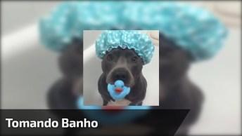 Cachorrinho Tomando Banho, Olha Só A Calma Dele Com Toquinha E Tudo!