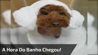 Cachorrinho Tomando Banho, Olha Só A Carinha Deste Amiguinho!