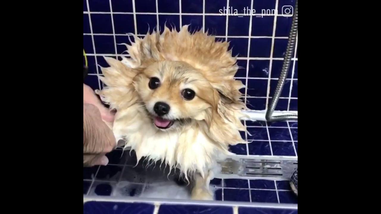 Cachorrinho tomando banho, olha só como ele fica quietinho