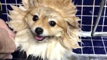 Cachorrinho Tomando Banho, Olha Só Como Ele Fica Quietinho, Só Curtindo!