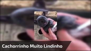 Cachorrinho Tomando Banho, Olha Só O Tamanhinho Dele, Muito Lindinho!