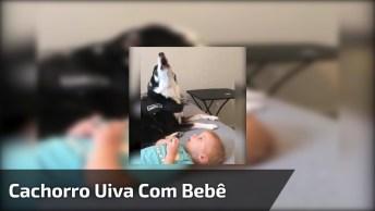 Cachorrinho Uivando Com Seu Pequeno Dono, Este Vídeo É Muito Fofinho!