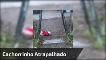 Cachorrinho Vai Correndo Com Pedaço De Madeira Na Boca, Veja O Que Aconteceu!