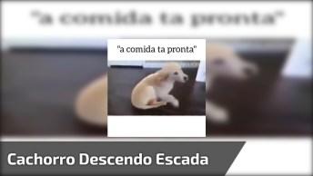 Cachorrinho Vai Descer A Escada E Cai Sem Querer, Olha A Carinha Dele!