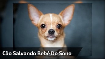 Cachorrinho Vê Sua Pequena Dona Cochilando E Vai Ajudar, Que Fofura!