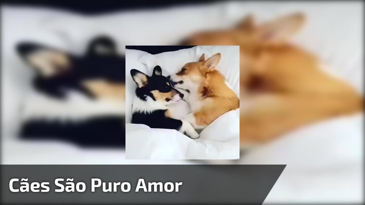 Cães são puro amor