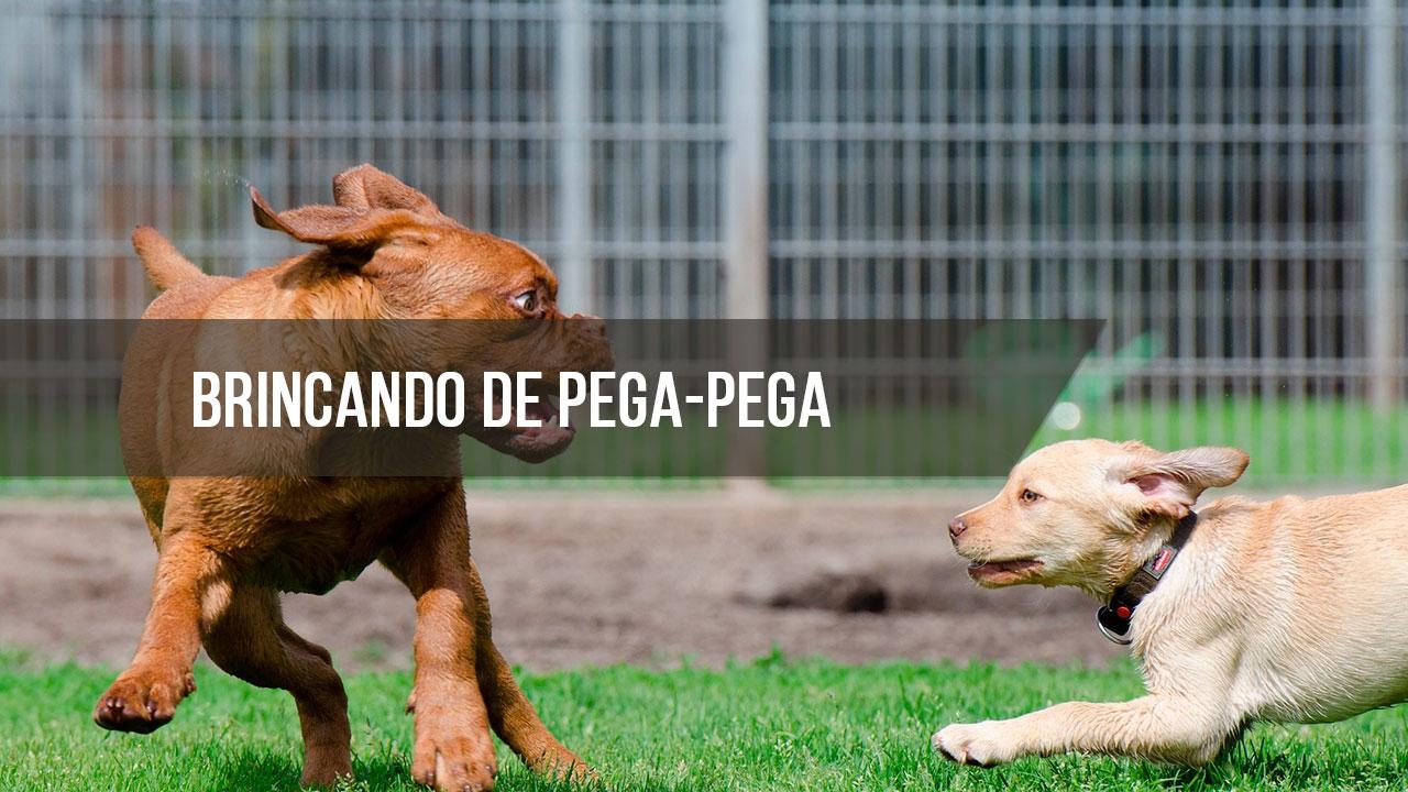 Cachorrinhos brincando de pega-pega