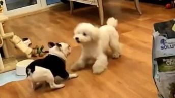 Cachorrinhos Com Dança Divertida, Será Que Eles Combinaram Isso?