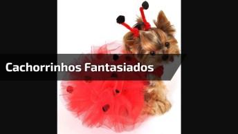 Cachorrinhos Com Fantasias Engraçadinhas, Quem Nunca, Hahahaha!