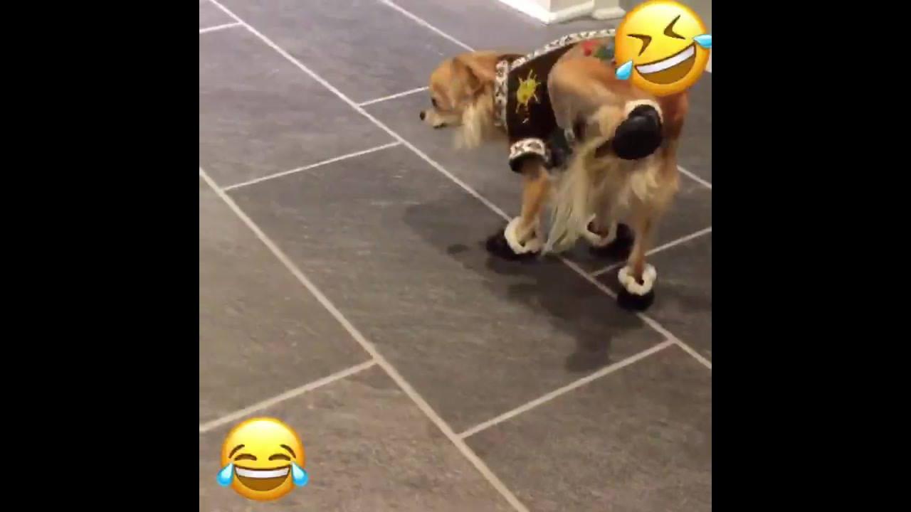 Cachorrinhos com sapatinhos