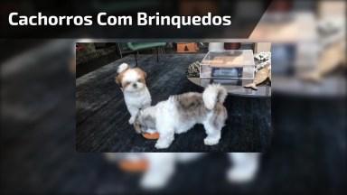 Cachorrinhos Com Seus Brinquedinhos, Mais Um Vídeo Fofo!