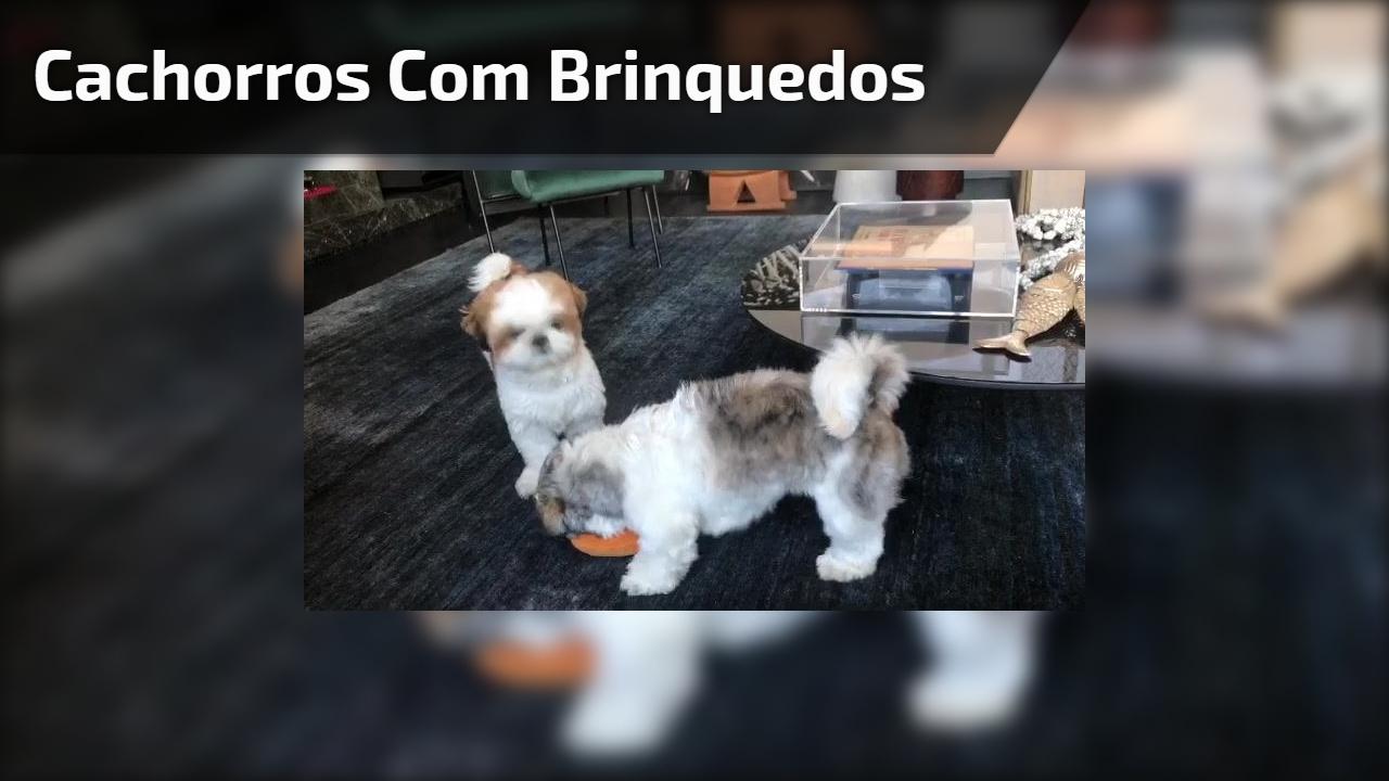 Cachorros com brinquedos