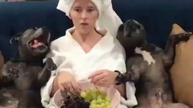 Cachorrinhos Comendo Frutinhas Com Sua Dona, Olha Só Que Fofuras!