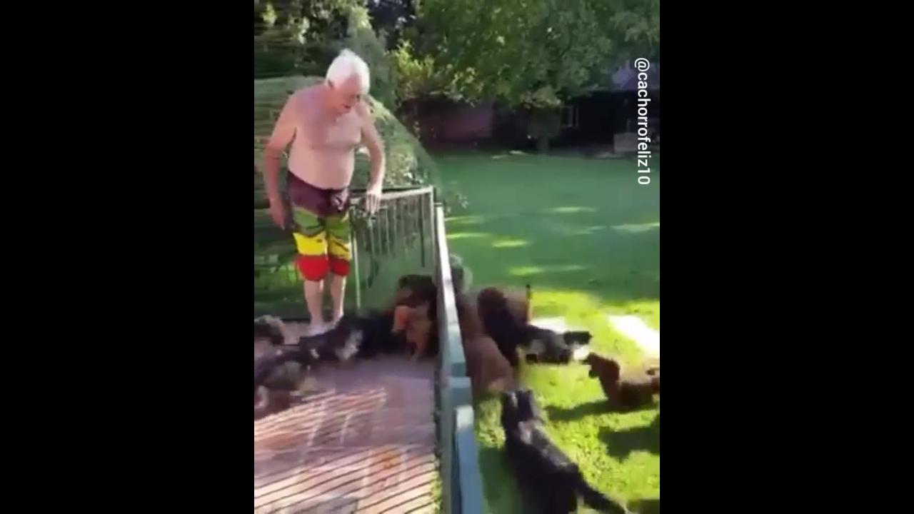 Cachorrinhos curtindo piscina