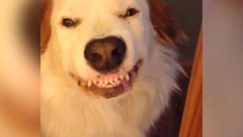 Cachorrinhos Dando Um Lindo Sorriso Para Seus Donos, Olha Só Que Fofos!