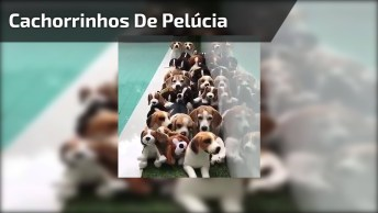 Cachorrinhos De Pelúcia, Ache Os De Verdade Se For Capaz, Hahaha!