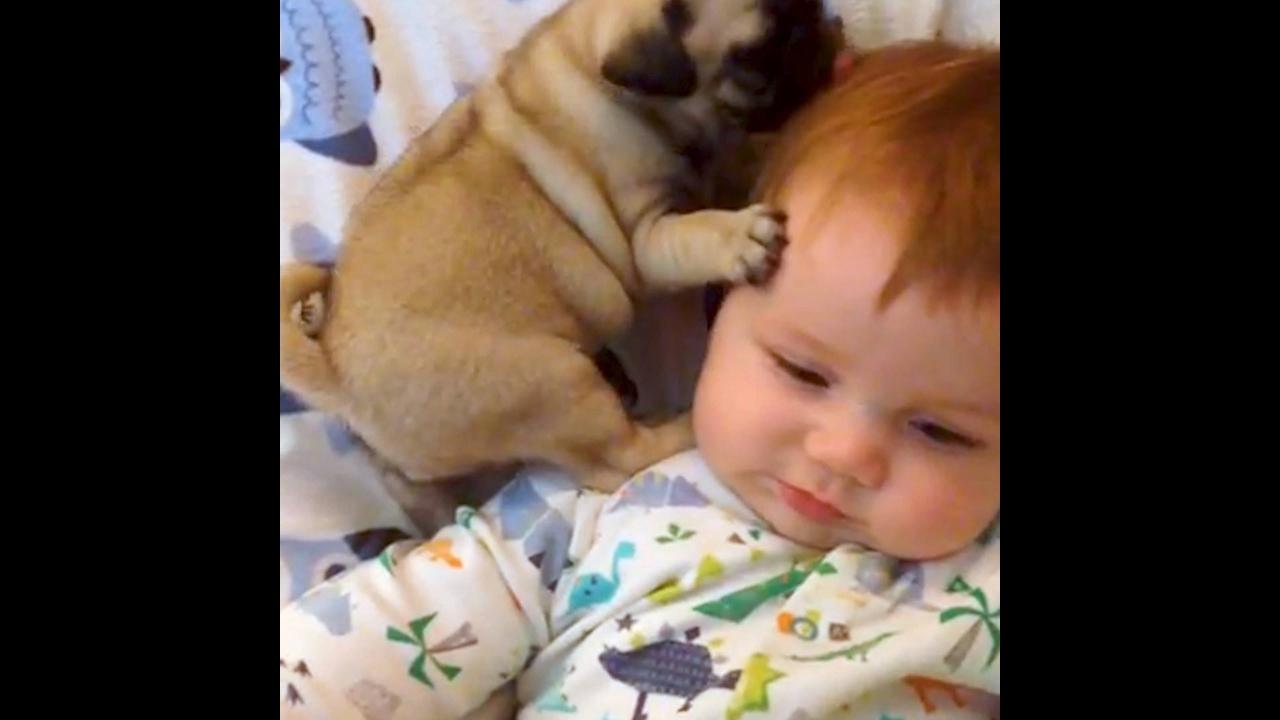 Cachorrinhos e crianças