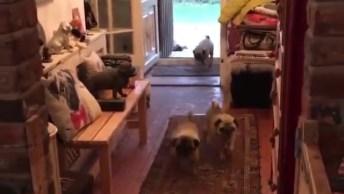 Cachorrinhos Entrando Para Dentro De Casa, Olha Só Que Fofinhos!