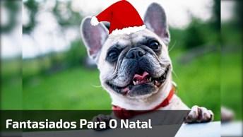 Cachorrinhos Fantasiados Para O Natal, Olha Só Que Figurinhas Fofas!