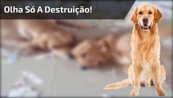 Cachorrinhos Fazem A Maior Bagunça Em Casa, Olha Só A Destruição, Hahaha!