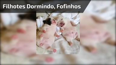 Cachorrinhos Filhotes De Barriguinhas Para Cima, É Muita Fofura!