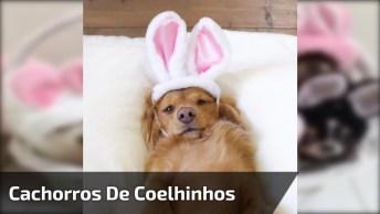Cachorrinhos Fofinhos Vestidos De Coelhinhos Da Páscoa, Veja Que Fofura!