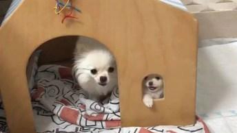 Cachorrinhos Fofos, Olha Só A Carinha Do Filhote Na Janelinha!