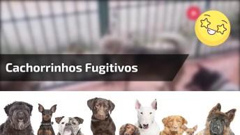 Cachorrinhos Fugindo Pra Rua, Olha Só A Festa Quando Conseguem!